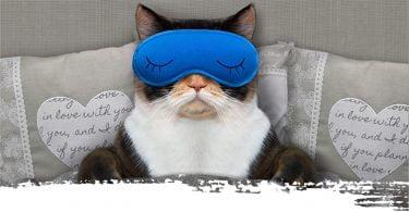 Sleep Routine Cat